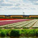 2018年までに、オランダの電車はすべて風力発電で走ります http://t.co/UXwqLjt93O http://t.co/Wwohu1h4xJ