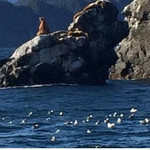 Today is a great day to follow my @WSJ colleague @ColleenMNelson , who is posting photos of Pres. Obamas Alaska trip http://t.co/9urnX6Igcu