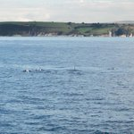 Pod of Rissos #dolphins spotted out of #plymouth @thembauk this morning http://t.co/xDQ5uLf7nk