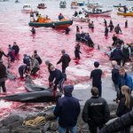 Anti-whaling boat seized by Scottish police after protest against Faroe Islands slaughter http://t.co/bedIZBZIyV http://t.co/NO6SahwpPF