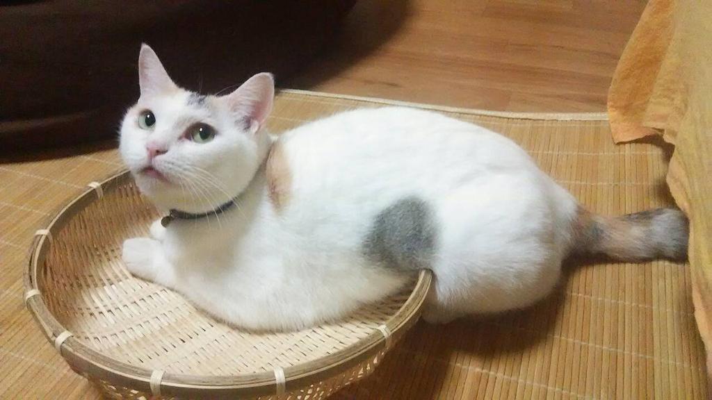 http://twitter.com/k_kazu_magi/status/639041214042345474/photo/1