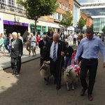 Its not every day you get to walk sheep down Exeter High St but here is Tony Rowe doing just that #freedomofcity http://t.co/Xl6kAWmElR