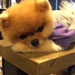 I think @jiffpom snapchat is the only snapchat I enjoy watching. I mean look at this little guy ???????? http://t.co/xooKuDoobw
