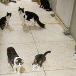 Cinco gatos já despencaram de apartamento no Rio, dizem vizinhos http://t.co/Na1lbOLeoM #G1 http://t.co/U5rWNQXpXZ
