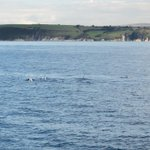 Rissos #dolphins out in #Plymouth Sound today. Beautiful day! Perhaps they are coming to visit @OceanCityFest ! http://t.co/JXoLh0tyYM