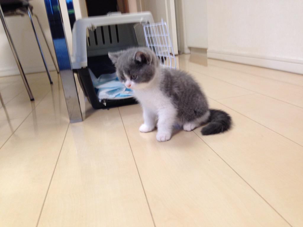 #繋がらなくていいから俺の猫を見てくれ http://t.co/FohZrgexAm
