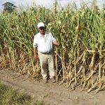 #Honduras Habrá escasez de granos básicos en Olancho a causa de la sequía ► http://t.co/ALr4Ucpkik http://t.co/39iMpFbOkC