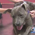 Pet rescue asking for help with burned dog's recovery http://t.co/lw6IK8NYCZ http://t.co/sxZvgGelHY /via @ABC7 @heykim