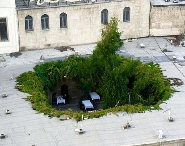 Mooie opening voor meer #duurzaamheid op onze daken... @blancoarchitect @groenkennisnet @VitaleGroenStad #dakwaarde http://t.co/Lvu9gTpINA