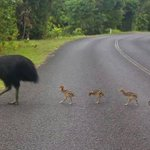 This is Far North Qld! Posted on FB by @ABCFarNorth pic by Marty Westcott #thisisqueensland http://t.co/ujpBKIu38k