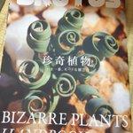 久々買った。 珍奇植物好き。。。 http://t.co/2oz2nxF94X