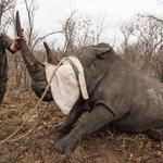 Suspected Kruger poachers jailed http://t.co/Ya7OpCfQlS http://t.co/xb2570mfYt