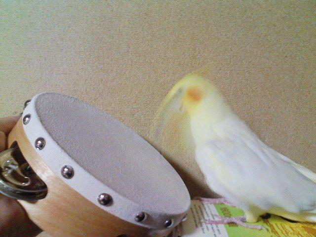 http://twitter.com/iichiko_hana/status/635471531808690176/photo/1