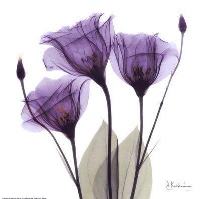 X線で花を撮る。 http://t.co/AWzn9k1Kce http://t.co/1Bo1vdd7J2