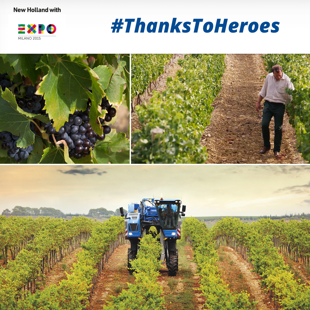 Xavier can walk along vineyards and know intuitively when it's time to pick. #ThanksToHeroes http://t.co/6X4bzMjsr5 http://t.co/91vY0NerZm
