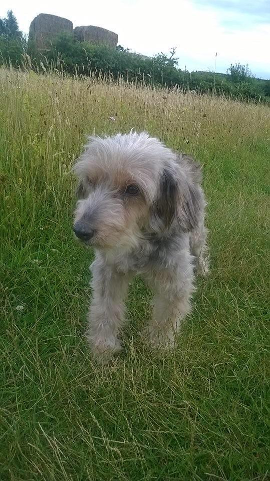 Lost grey long-haired elderly dog from PE31 W Norfolk on 24/08/15 Needs medication/special diet. Tweet @AbiEldershaw http://t.co/wJz96hsoNt