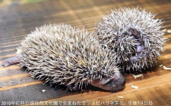 http://twitter.com/TokyoZooNet_PR/status/635970596141056000/photo/1
