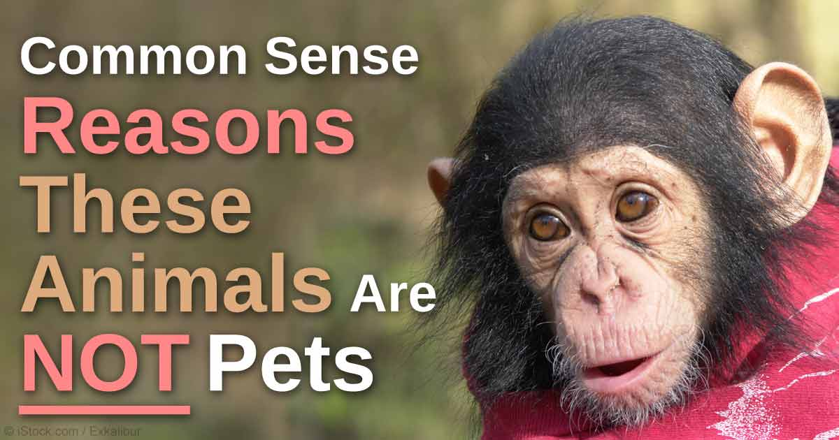 Wild animals should be left in the wild. http://t.co/pHTEWENiHR http://t.co/l0OuzkE8ee