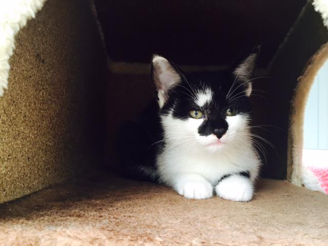 My name is Dottie and I am 2 months old. Could you offer me or my siblings a forever home? http://t.co/t0GlNYX27V http://t.co/V2zYoZEV0w