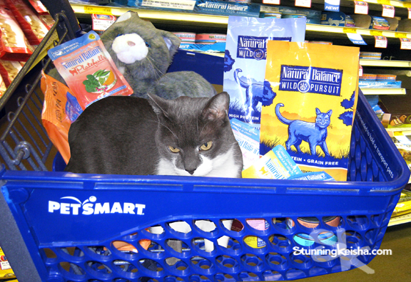 that's Plush CK in the back. @NaturalBalance @BlogPaws @PetSmart #BlogPawsChat http://t.co/OXWAM5P53t