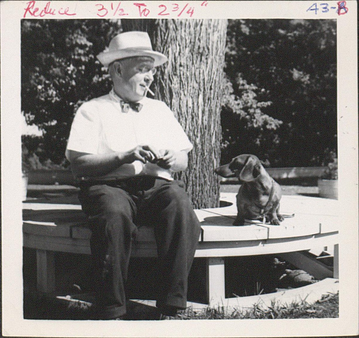 Paws for a moment to enjoy these photos of dogs in our collex, http://t.co/LQFv441Fhx #NationalDogDay http://t.co/pSwRSxtVib