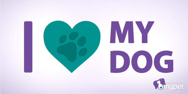 Happy #NationalDogDay! RT if you love your pup to the moon and back. http://t.co/JKOhTWosP6
