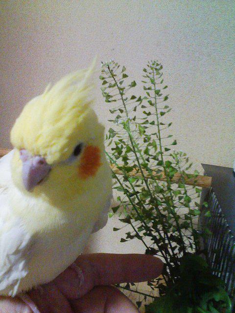 http://twitter.com/iichiko_hana/status/636674178649714688/photo/1