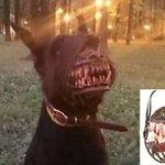 Máscara assustadora para cães à venda na Rússia vira hit na web http://t.co/eRWuLVb1kx #PlanetaBizarro #G1 http://t.co/Di72vDQJWZ
