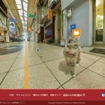 #Japan eyes tourist boost with Google-style street view… for cats http://t.co/4NvcVJeFQX http://t.co/m6kHEijlWb