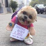 I love this dog! Thanks @marniethedog #1day #whatdoyoumean http://t.co/s7BQv4uCpL