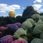 Les touristes sont au rendez-vous cette année notamment à @terrabotanica @Angers_Tele #angersémoi #Jaimelanjou http://t.co/yoxUL8xDbc