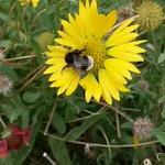 #battleflowers le soleil revient !  Bonne journée tout le monde ! http://t.co/fc0WDMowYg