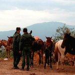 Retenida caravana de caballos, burros y mulas que eran llevadas de contrabando a Colombia http://t.co/AzTVIaIyuW http://t.co/4LsBokeXJx