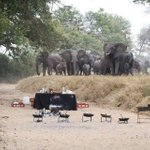 Happy Friday, Namibia! How to clear a bush breakfast in 60 seconds... (image: Africa This is Why I Live Here) http://t.co/8ATGZ4gCRE