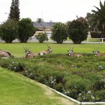 This image of oryx chilling in public parks in the southern town of Oranjemund, just about sums up Namibias Friday. http://t.co/0Km61ZA6iK