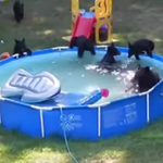 Watch black bears beat the heat at N.J. pool party http://t.co/CHjXZY5ZqP http://t.co/oeqTxA9Snk