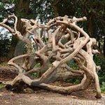 The #indranimukherjea family tree