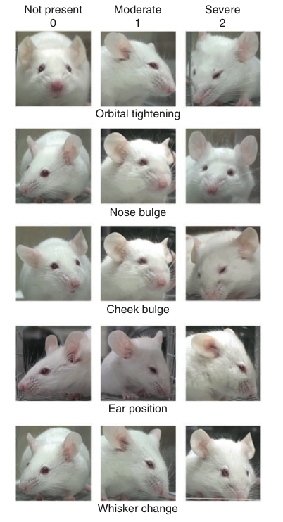 today i learned there is a 'mouse grimace scale' for identifying when a mouse is pissed off at you http://t.co/PoYBpvqPDc