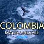 Colombia, magia salvaje, la película que enaltece la riqueza natural de nuestro país. http://t.co/RBLOWtqXFc http://t.co/KOXinGoeMw