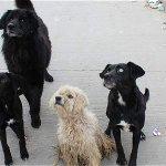 Ordenan atención veterinaria gratuita a gatos y perros sin dueño http://t.co/EwtQYQJkM9 http://t.co/uVhQUHunuR