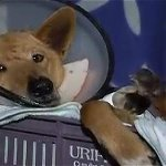 Así va el proyecto que propone cárcel y multas por maltratar animales http://t.co/s2inhAcCdt http://t.co/QDWv4hpD7A