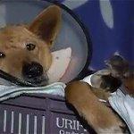 Así va el proyecto 172, que propone cárcel y multas por maltratar animales→ http://t.co/X815ANqJg6 http://t.co/PxnI1aF6cD