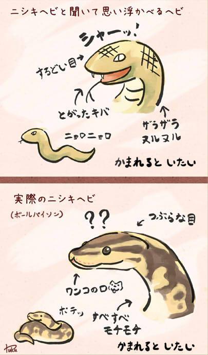 #ヘビの悪印象を塗り替えよう http://t.co/s0lEB3ZzCG
