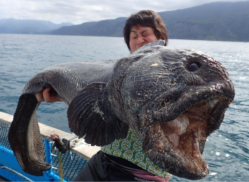 【画像】 日本で釣れた化け物みたいな魚。海外で「放射性物質のせい」と言われる