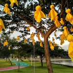 #Bersih4 di Tanjung Lipat, KK. Rare gila gambar. http://t.co/0qvi09YifL
