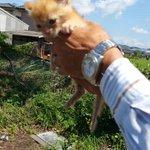拡散RT @nekosuki244 #拡散希望 #熊本 #宇城 #保健所 #猫 #里親募集 【宇城保健所】【期限:8/31】3ヶ月以下♀ 完全室内で終生飼育していただける方を探しています http://t.co/llHWTD7HLQ http://t.co/ICYsuCzPQT