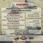 BESOK! Baby Turtle Release by @MataIND 30/8/15. 12.30. Pondok Nongko Beach, Kabat @banyuwangi_kab Lets go #EventBwi http://t.co/k7lwmFTm4E