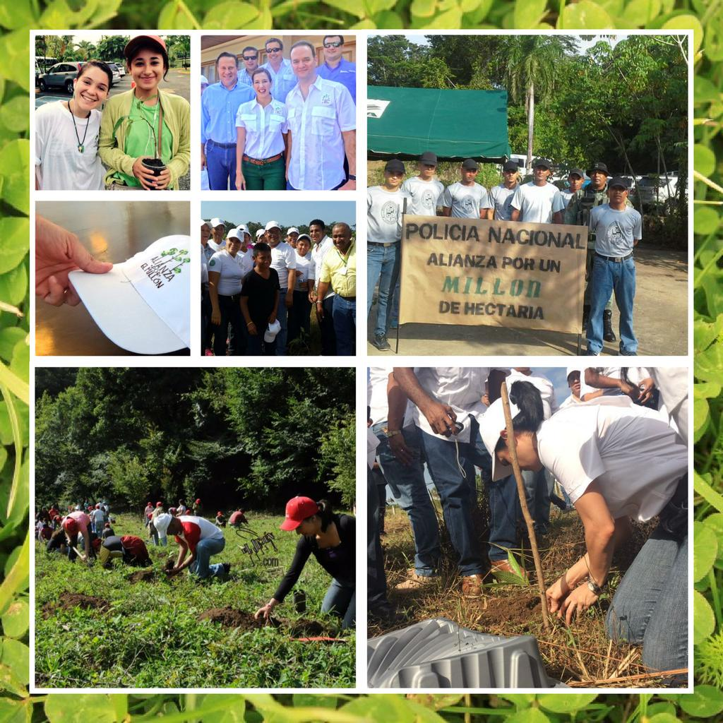 Image result for gran dia nacional de reforestacion panama