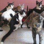 En dos días cerrarían albergue de gaticos y perritos de #Bucaramanga. Hoy jornada de donación. http://t.co/MaN9dLxpEa http://t.co/xmwkfaNNDZ