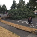 Tree down on N 26th near Pearl Street #Tacoma #wawind http://t.co/OwHpqSGdsk